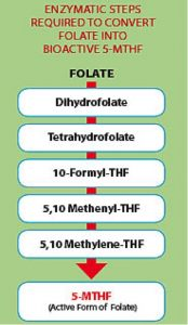 enzymatic steps multivitamins
